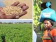 iciHaïti - USAID : L'agence américaine fournit une aide alimentaire à plus de 60,000 ménages