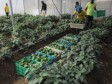 Haiti - Agriculture : The agricultural revolution in greenhouses