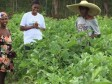 Haiti - Agriculture : 10 years of USAID's Winner project, impressive results