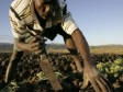 Haiti - Agriculture : Peasants trained in agro-ecology