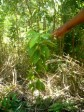 Haiti - Environment : Conservation of soil and reforestation in Savane Carré