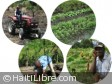 Haiti - Agriculture : 864 million gourdes to revitalize the agricultural sector