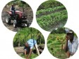 Haiti - Agriculture : Measures to encourage the agricultural sector