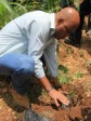 Haiti - Environment : The President plants trees...