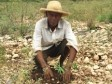 Haiti - Environment : Self-financing model in agroforestry