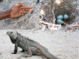 Haiti - Environment : Towards the creation of a wildlife sanctuary in Anse-à-Pitres