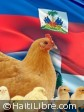 Haiti - Economy : Soon the end of the ban on poultry products ?